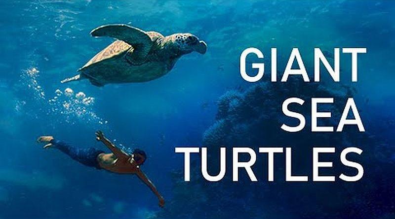 Die Philippinen im Video - Freitauchen am Apo Riff