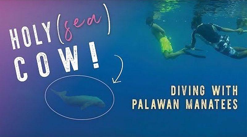 PHILIPPINEN MAGAZIN - VIDEOSAMMLUNG - Tauchen mit einer Seekuh