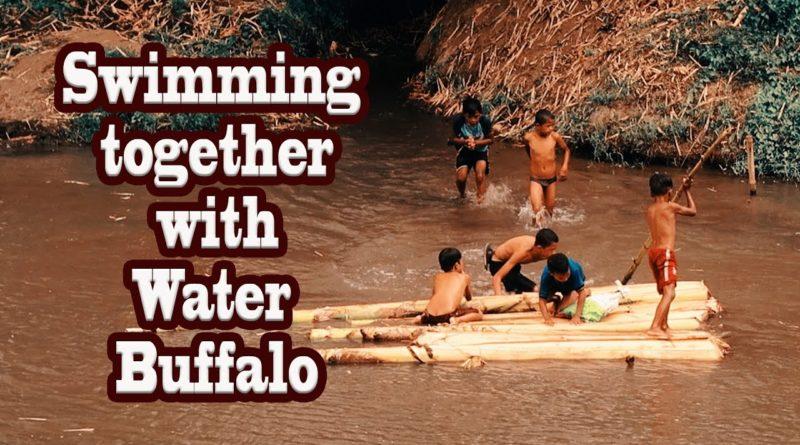 Die Philippinen im Video - Schwimmen mit den Wasserbüffeln