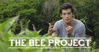 Die Philippinen im Video - Das Bienenprojekt