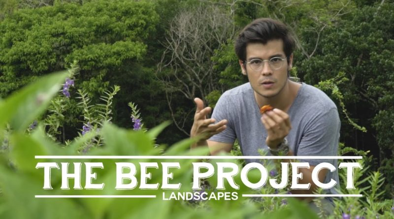 Die Philippinen im Video - Das Bienenprojekt
