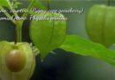 Die Philippinen im Video - Wilde und seltene Früchte