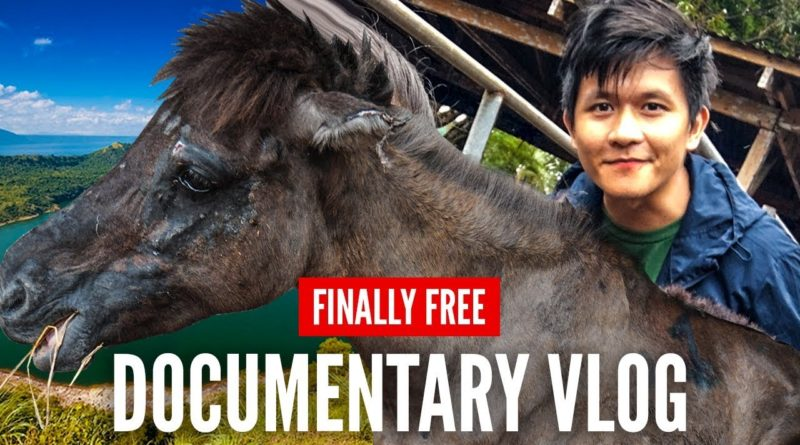 Die Philippinen im Video - Pferde von Taal vor dem Schlachthof gerettet