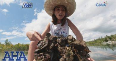 Die Philippinen im Video - Austern von Bohol