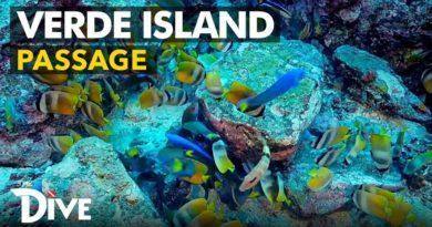 Die Philippinen im Video - Rückblick auf die Verde Island Passage Expedition