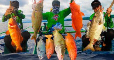 Die Philippinen im Video - Ich habe wunderschöne erstklassige Fische gefangen