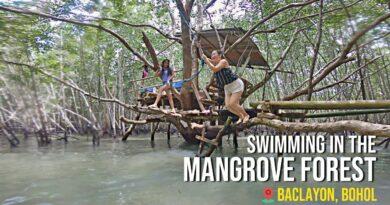 Die Philippinen im Video - Schwimmen im Mangrovenwald