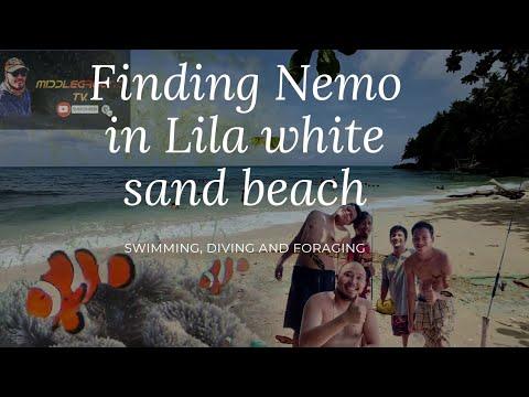 Die Philippinen im Video - Schöner weißer Sandstrand in Lila auf Bohol