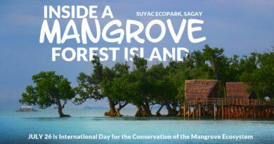 Die Philippinen im Video - Entdecke einen Mangrovenwald auf einer Insel