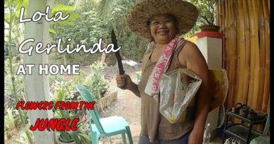Die Philippinen im Video - Oma Gerlinda holt Pflanzen aus dem Dschungel Foto + Video von Sir Dieter Sokoll für PHILIPPINEN MAGAZIN