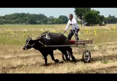 Die Philippinen im Video - Rennen der Wasserbüffel