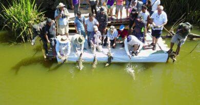 Die Philippinen im Video - Paghungawan Marsh Philippine Crocodile Conservation Einführung