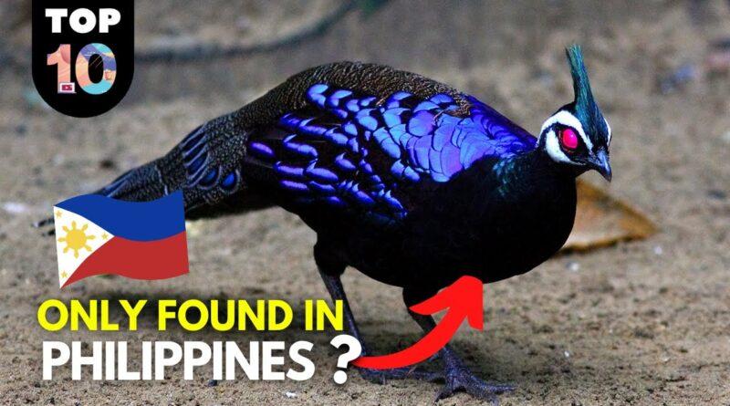 PHILIPPINEN VIDEO - 10 seltene Tiere der Philippinen
