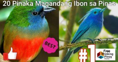 Die Philippinen im Video - Die 20 schönsten Vögel der Philippinen