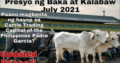 Die Philippinen im Video - Auf dem Viehmarkt von Padre Garcia