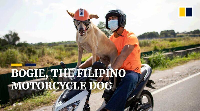 Die Philippinen im Video - Bogie, der motorradfahrende Hunde