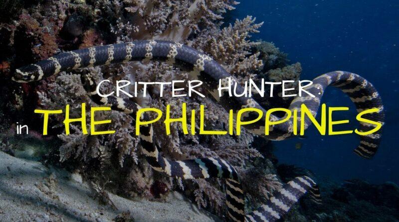 Die Philippinen im Video - Meeresleben auf den Philippinen