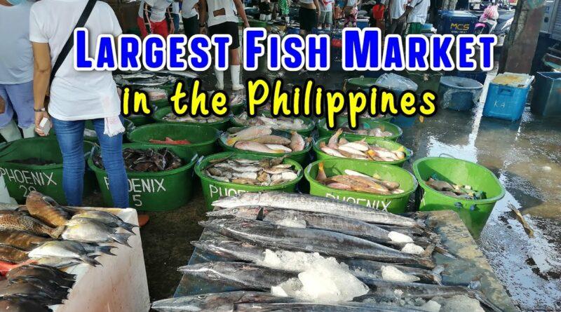 Die Philippinen im Video - Navotas Fischereihafen in Metro Manila